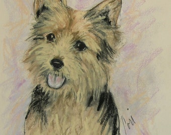 Soulmate Norwich Terrier Dog Art Pastel Drawing By Cori Solomon