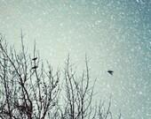 Snow Flight - 8x8 bird photo - winter trees, winter, bird photography, dusk, dark blue, evening sky, snow, winter decor, nature photography - SusannahTucker