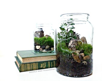 Desktop Canning Jar Terrarium / Glass Planter & Fern Moss / Home Decor