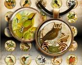 1 inch (25mm) size images EDEN BIRDS Printable download Digital Collage Sheet for glass and resin pendants magnets bottle caps round bezels