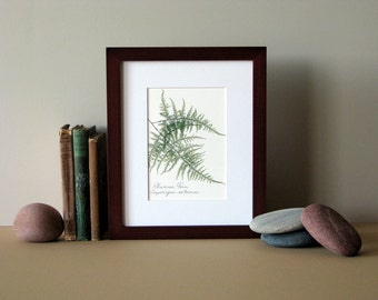 "Pressed fern print, 8"" x 10"" matted, Plumosa fern, green woodland fern, botanical art, no. 025"