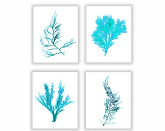 Set of Four, Seaweed Print, Vibrant Blue-Green Botanical Artwork, Ocean, Coastal Living, Beach, Wall Decor, Matted Print, Teal