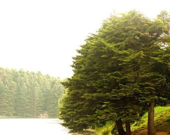 Digital photo download Landscape photography Tree photo Camping Hotel wall decor Printable art