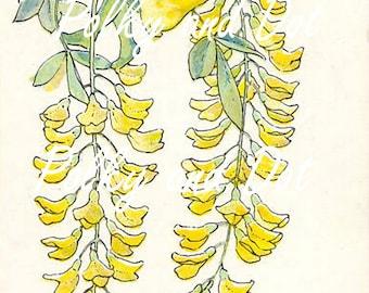 Golden chain flower fairy vintage digital