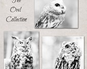 Owl Photography Nature Woodland Bird Photography Feathers Nature Forest Animals Dreamy Surreal Black White Gray Fairy Tale, Fine Art Prints