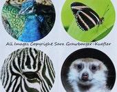 Calgary Zoo Stickers (Round)