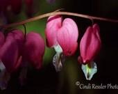 Be Still My Heart, Fine Art Photography, Flower Photography, Floral Photography