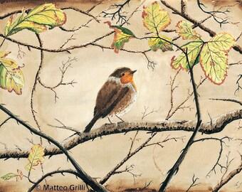 Robin, Original Watercolour Painting, Free Shipping