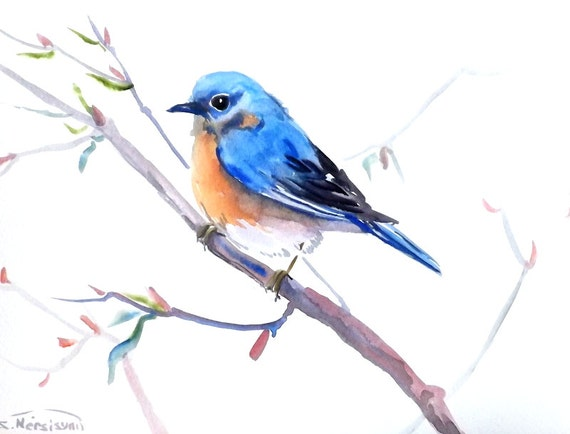 Watercolor Bluebird