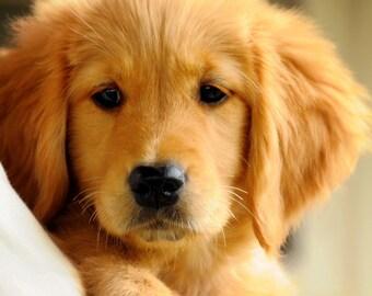 Puppy Love adorable puppy golden retriever digital download
