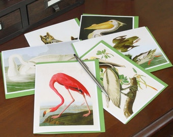 Frameable 5x7 Greeting Card Set with Audubon artwork (6 Card Set with colored envelopes)