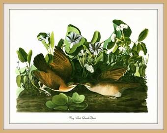 Vintage Audubon Bird Art Print, Key West Quail-Dove, 19th Century Illustration, 1970s Vintage Lithograph, Wall Art, Home Decor
