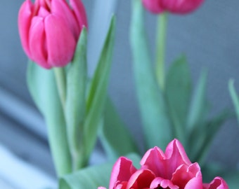 SALE Pink Tulips 8x10 Photo Print Flowers floral fresh bright happy petals