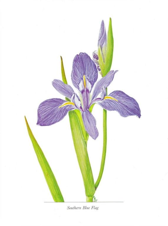 Iris Floral Illustration Flower Decor Vintage Botanical Print to Frame Floral Wall Art