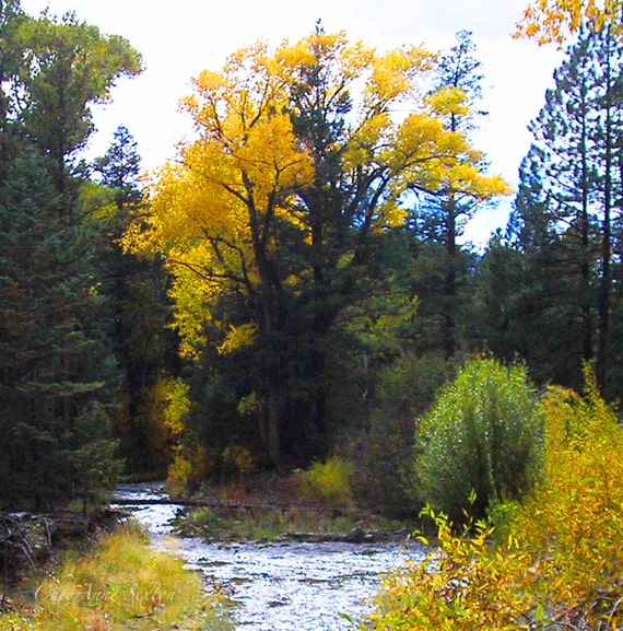Autumn New Mexico River Taos cottonwoods golden yellows Fall 8x14 Photograph giclee