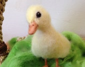 Needle Felted Duckling, life-sized, soft and fluffy