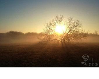 sunrise photograph, landscape photography, tree photo, nature wall art, inspirational art
