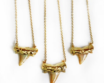 SHARK tooth necklace - natural