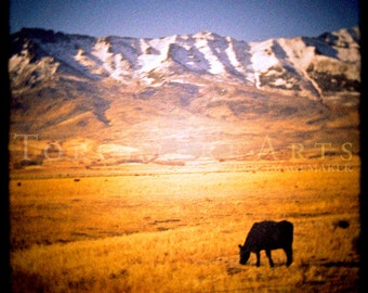 Black Cow Art, Grazing Cow Pasture, Cow Photography, Ruby Mountains Of Nevada, Nevada Photography, Wild West, Western Photography Print