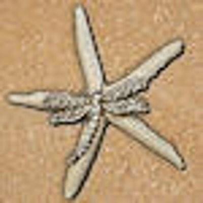 EnchantedStarfish