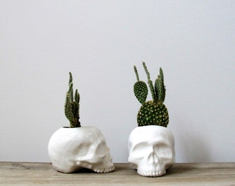 Ceramic Skull Planter - perfect for cactus succulent or air plant
