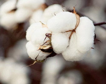 cotton photography, rustic home decor, farm decor, laundry room art decor, white wall art, country decor, Cotton Bouquet