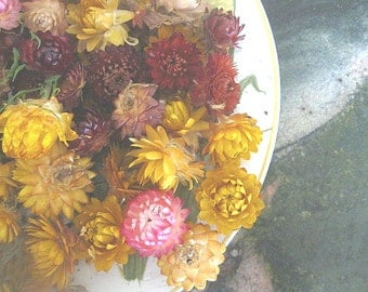 STRAWFLOWERS  Herb and Flower Bunches  ASSORTED  size and colors