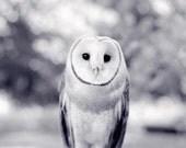 Barn Owl Print, Woodland Animal Photography Print, Owl Art Print, Owl Photograph, Owl Photo, Black & White