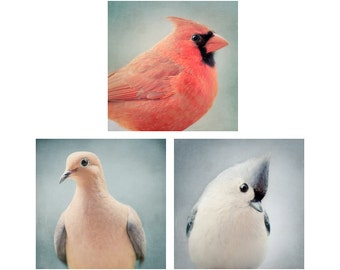 Bird Portrait Print Set, Bird Wall Art, Cardinal, Mourning Dove, Tufted Titmouse, Photography, Set of 3 Photos