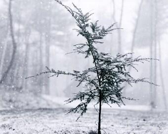 Christmas Tree Art, Winter Photography, Nature Art, Snow, Black & White, Winter Art, Woodland Decor, Pine Tree