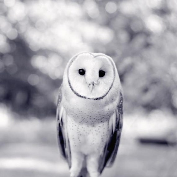 Barn Owl Print, Woodland Animal Photography Print, Owl Art Print, Owl Photograph, Owl Photo, Black & White