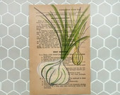 Onions - Original Painting on Antique Book Paper