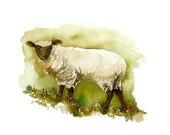 Feeling Sheepish - 11x14 Watercolor Print of Black Faced Sheep by Amy Woods