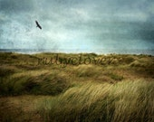 RAVEN Over Head, Fine Art Photograph, IRELAND Landscape Photography, Isolated BEACH, Grunge Texture, Square Photo, Blackbird, Flying Bird