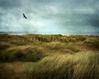 RAVEN Over Head, Fine Art Photograph, IRELAND Landscape Photography, Isolated BEACH, Grunge Texture, Square Photo, Blackbird, Flying Bird