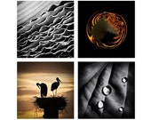 Photography gift set of four 5x5 prints Black and white Storks print for animal lover Passion Abstract image perfect for Ikea Ribba