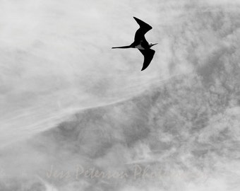 Bird Photography Frigatebird In Flight Nature Wall Decor Wildlife Photo Minimalist Black & White Gray Home Decor Bird Wall Print 8x10, 5x7