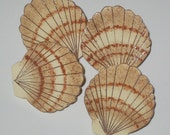 Hand Painted Wooden Sea Shell Push Pins for Cork Board