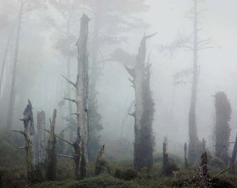 Coastal Fog - Greeting Cards, Scenic, California, Set of 5 Blank photo cards