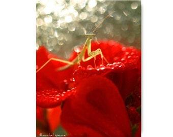 Baby Praying Mantis Photograph Praying Mantis Print Natural History Red Flower