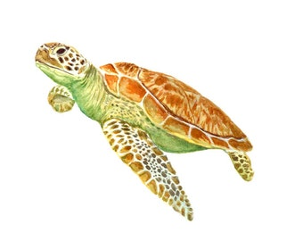Sea turtle 8x10 giclee print watercolor painting for Turtle fish paint