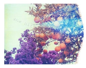 Fruit Print Oranges and Purple A Polaroid of Fruit and Flowers 11x14 inch Fine Art Print Venice Beach California-Signed by Artist