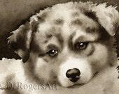 AUSTRALIAN SHEPHERD Puppy Sepia Art Print Signed by Watercolor Artist DJ Rogers