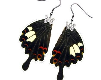Real Butterfly Wing Earrings (Helenus Hindwing - E018)