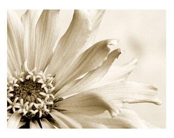 Sepia Flower Photography Zinnia Dreamy Fine Art Nature
