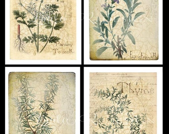 Parsley, Sage, Rosemary & Thyme--Note Card Set of Four