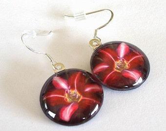 Flower Earrings Daylily Art Purple Red Violet Round Dangle Earrings Purple Pinwheel