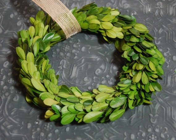 "8 ""Preserved Boxwood Wreath"