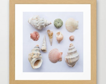 Shells photograph, nature beach print, shells collection, beach shells decor print, sea urchin shells, beach house wall art, sea side photo