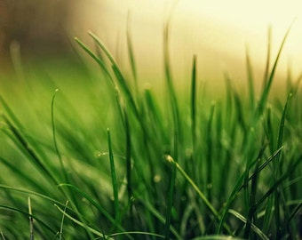 Nature Summer Photography - Green Green Grass no. 2, home decor, spring abstract grass, plant, bright green living room decor, warm yellow